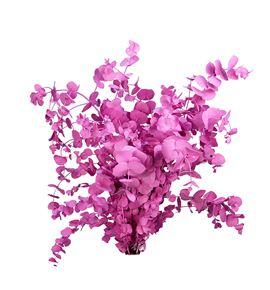 Eucaliptus cinerea rosa - EUCINROS