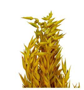 Avena seca amarilla - AVESECAMA