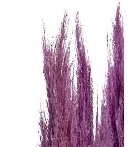 Cortaderia purple 140 - CORPUR