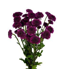 Marg col uva purple - MCUVAPUR