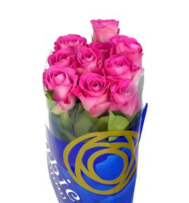Rosa hol h3o 60 - RGRH3O