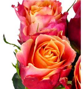 Rosa hol 3d 50 - RGR3D