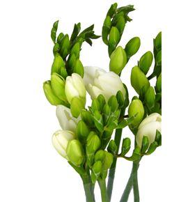 Fresia ambiance blanco 50 - FREAMBBLA