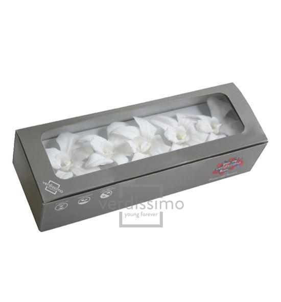 Dendrobium preservado blanco den/1000 - DEN1000-03-ORQUIDEA