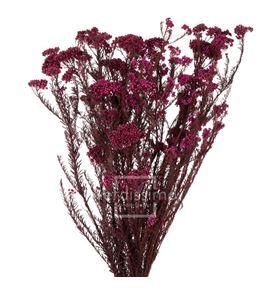 Flor de arroz preservado hdi/0230 - HDI0230-02-HELYCHRISIUM-DIOSMI