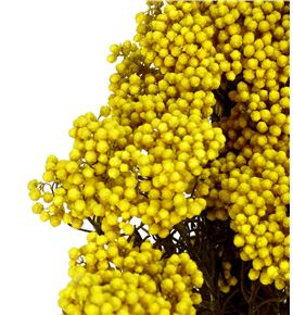Flor de arroz preservado hdi/0300 - HDI0300