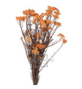 Flor de arroz preservado hdi/0550 - HDI0550-02-HELYCHRISIUM-DIOSMI