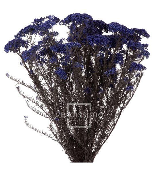 Flor de arroz preservado hdi/0610 - HDI0610-02-HELYCHRISIUM-DIOSMI