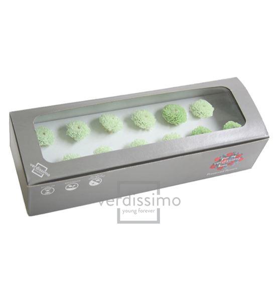 Focus preservado verde foc/2160 - FOC1160-03-CRISANTEMO