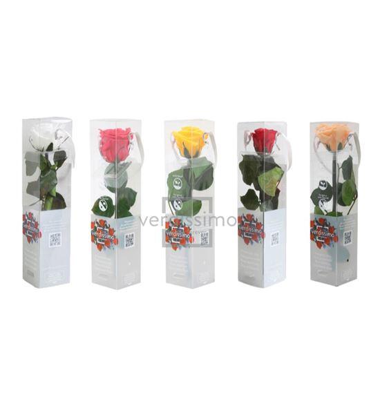 Rosa amorosa preservada mini prz/2999 - PRZ2999-05-ROSA-TALLO-MINI