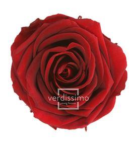 Rosa preservada standart 6 unid rst/280g - RST280G-03-ROSA-STANDARD
