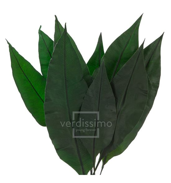 Tropical leaf preservado trl/9103 - TRL9103-2-HOJA-TROPICAL