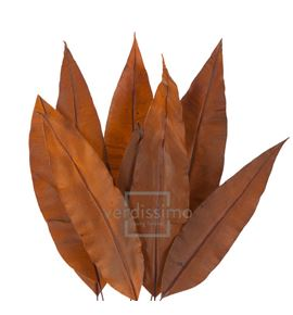 Tropical leaf preservado trl/9503 - TRL9503-2-HOJA-TROPICAL