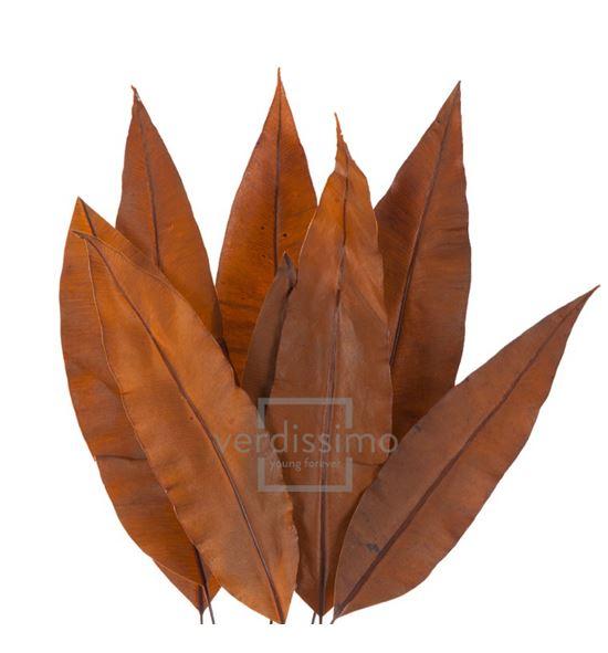 Tropical leaf preservado trl/9503 - TRL9503-2-HOJA-TROPICAL