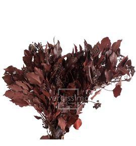 Hiedra arborea preservado hed/4203 - HED4203-2-HIEDRA