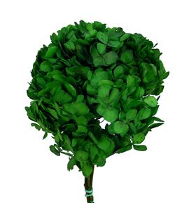 Hortensia preservada standard hrt/0130 - HRT0130