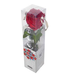 Rosa amorosa preservada mini garden prg/2200 - PRG2200