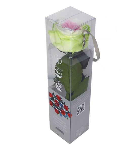 Rosa amorosa preservada mini garden prgt/2104 - PRG2104
