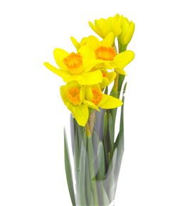 Narciso pinza 50 - NARPIN