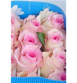 Rosa col mandala 60 - RCMAN