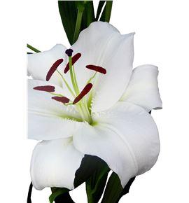 L.o. santander 1ª 2 flores - LOSAN