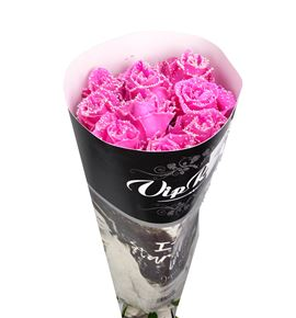 Rosa hol choco rosa 70 - RGRCHOROSA