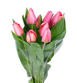 Tulipan nac barre alta - TULBARALT