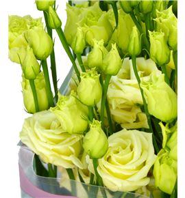 Lisianthus rosita yellow 75 - LISROSYEL