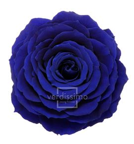 Rosa preservada king rsk/2630 - RSK2630-03-ROSA-KING