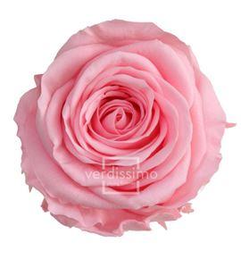 Rosa preservada standart 6 unid rst/242g - RST242G-03-ROSA-STANDARD