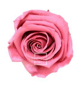 Rosa preservada standart 6 unid rst/248g - RST248G-03-ROSA-STANDARD
