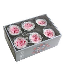 Rosa preservada jardin 6 unid rgab/2040 - RGAB2040-03-ROSA-JARDIN