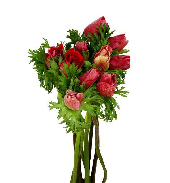 Anemona roja - ANEROJ