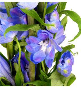 Delphinium guardian blue 100 - DELGUABLU