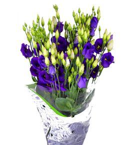 Lisianthus piccolo violet 75 - LISPICVIO