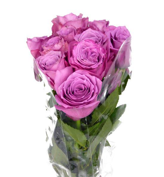 Rosa hol. new orleans 50 - RGRNEWORL