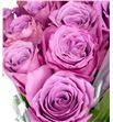 Rosa hol. new orleans 50 - RGRNEWORL1