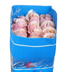 Rosa col mother of pearl 40 - RCMOTPEA