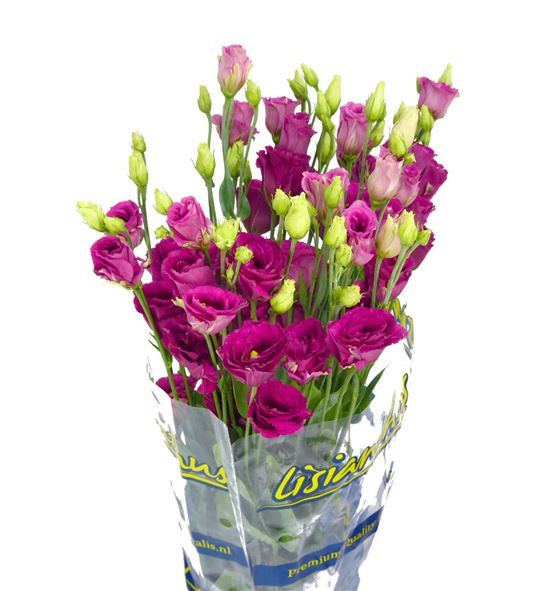 Lisianthus rosita red 75 - LISARORED