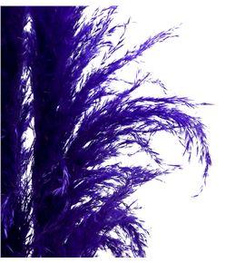 Cortaderia pampus azul 160 - CORPAMAZU