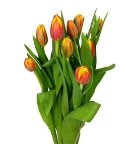 Tulipan dow jones 40 - TULDOWJON