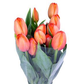 Tulipan nac sunbelt - TULSUN