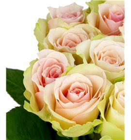 Rosa hol la belle 50 - RGRLABEL