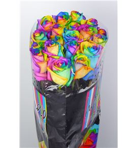 Rosa hol. arcoiris 75 - RGRARC