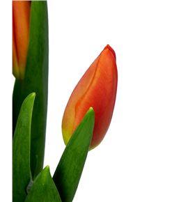 Tulipan orange juice 37 - TULORAJUI