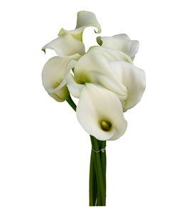 Cala white present 70 - ZANWHIPRE