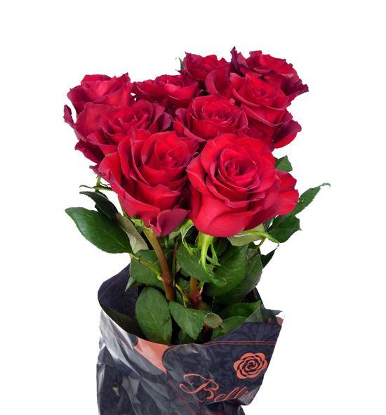 Rosa hol ever red 60 - RGREVERED