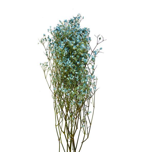Gypsophila seco azul claro - GYPSECAZUCLA
