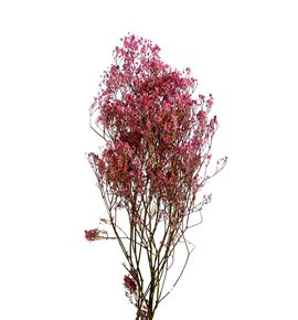 Gypsophila seco rosa claro - GYPSECROSCLA