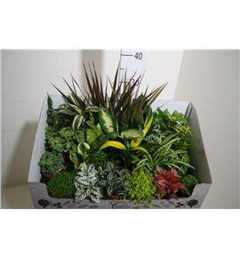 Pl. verde mixta 35cm x24 - PLAMIX24935